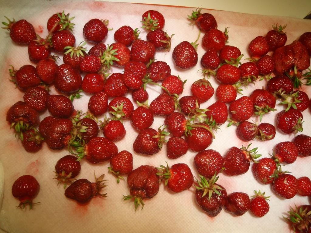 Strawberries-drying