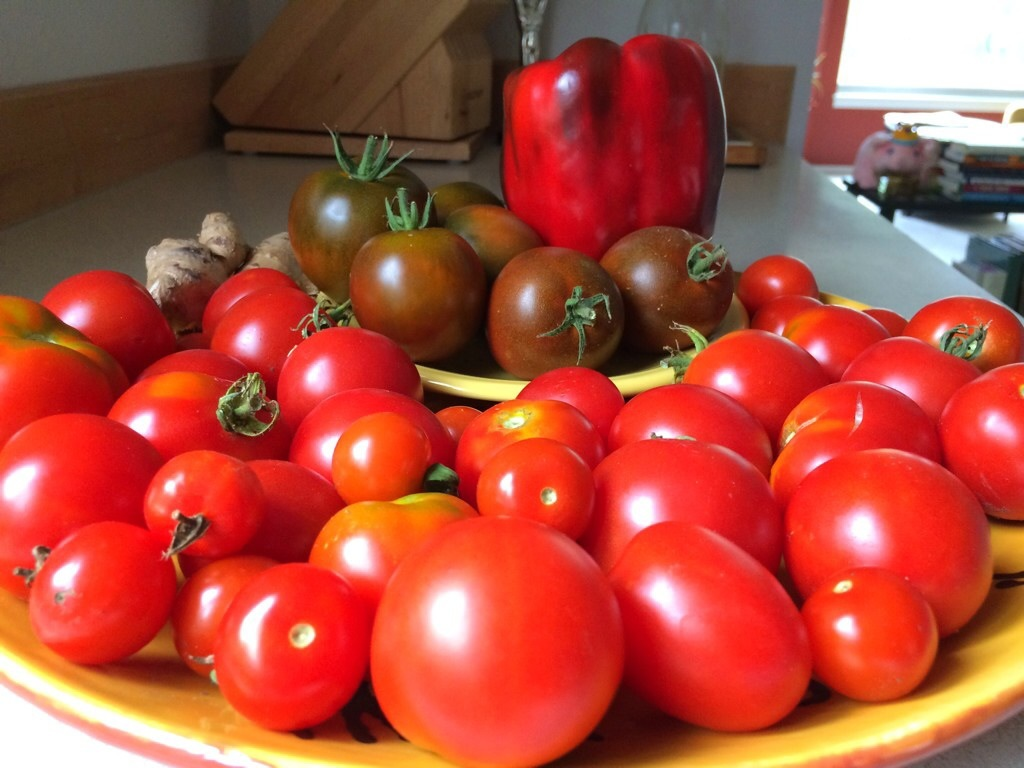 Tomato Harvest Aug 2014